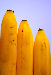 Bananas: The Wise Peoples Fruit
